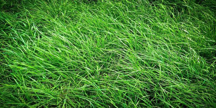 grass-baggrund-1600x800